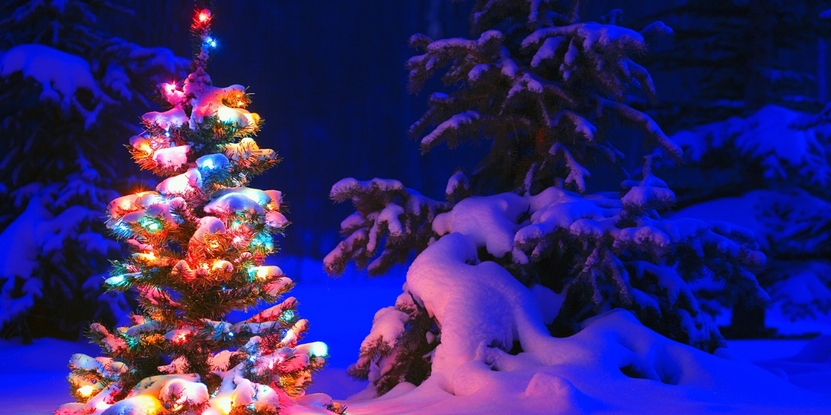 Image of lit Christmas tree in a snowy forest
