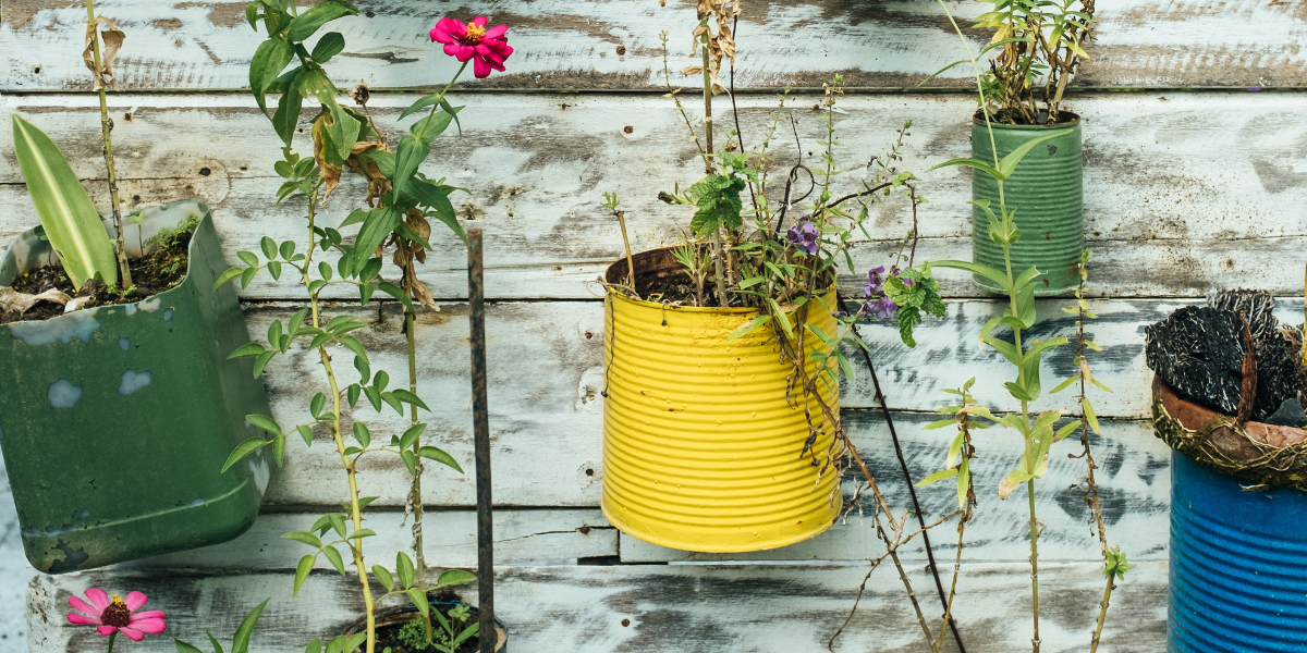 Image of flowers growing in old tins secured to fence